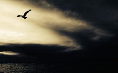 Ethän koske minuun – kokemuksia psykiatriselta ja sisäisiä toiveita luottamuksen rakentumisesta